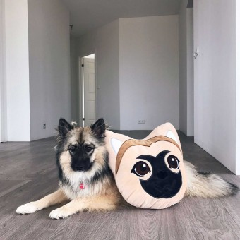 Melina Sophie Kissen Godi Merchandise Shop Dog YouTuber